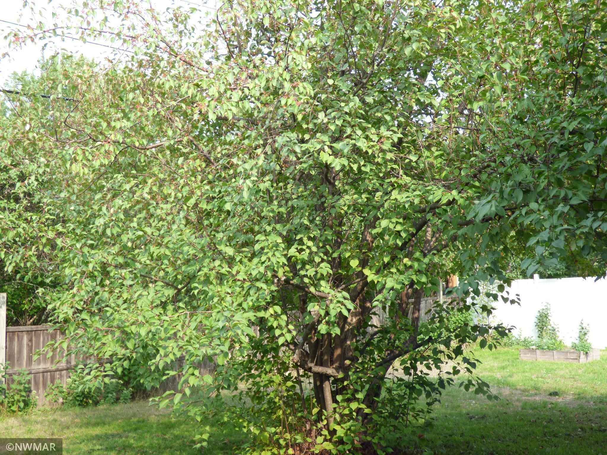 View 21 photos of this 3 bed, 1 bath, and 1,475 sqft. single_family home located at 323 Norwood Dr NE, Bemidji, Minnesota 56601 is Pending for $189,000.