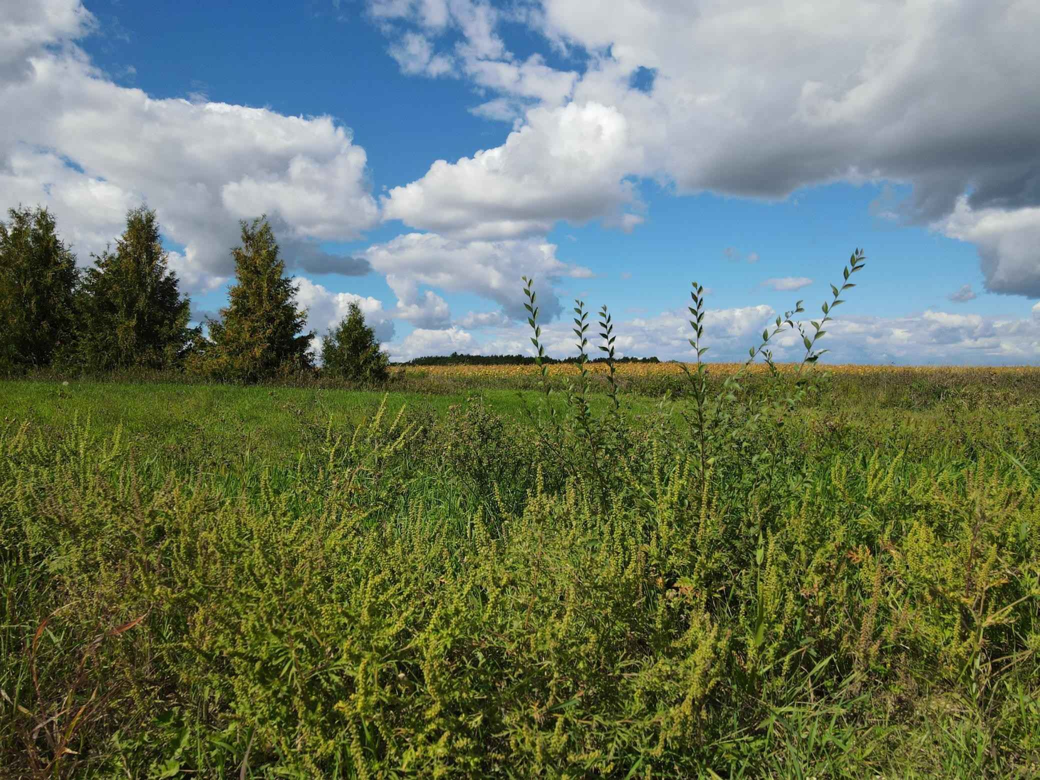 View 16 photos of this _0 bed, _0 bath, and  sqft. land home located at 65424 343rd St, Watkins, Minnesota 55389 is Active for $49,000.